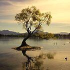 Single Tree by PerkyBeans
