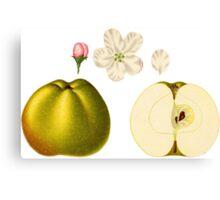 Apple Illustration Canvas Print