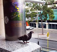 Vaguely A Lone Piebald Pigeon Goes Shucks And Looks A Robot In the Eye by Robert Phillips