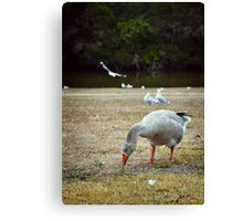 Goose & Co. Canvas Print