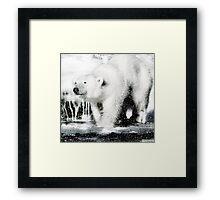Polar pleasures Framed Print