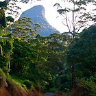The Road to Mt. Warning by pictureit