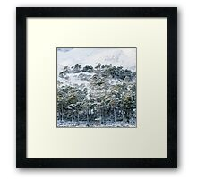 Forest after snowstorm Framed Print