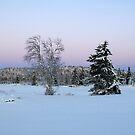 Trees, Sjusjøen by Algot Kristoffer Peterson