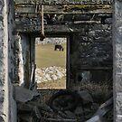 windows by NordicBlackbird