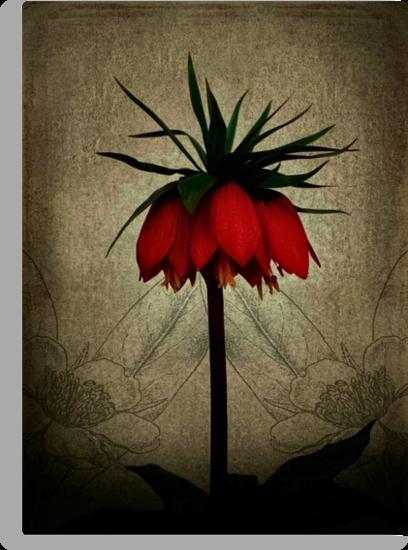 Fritalleria in bloom by missmoneypenny