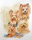 Yorkshire Terrier w/Ghost by BarbBarcikKeith