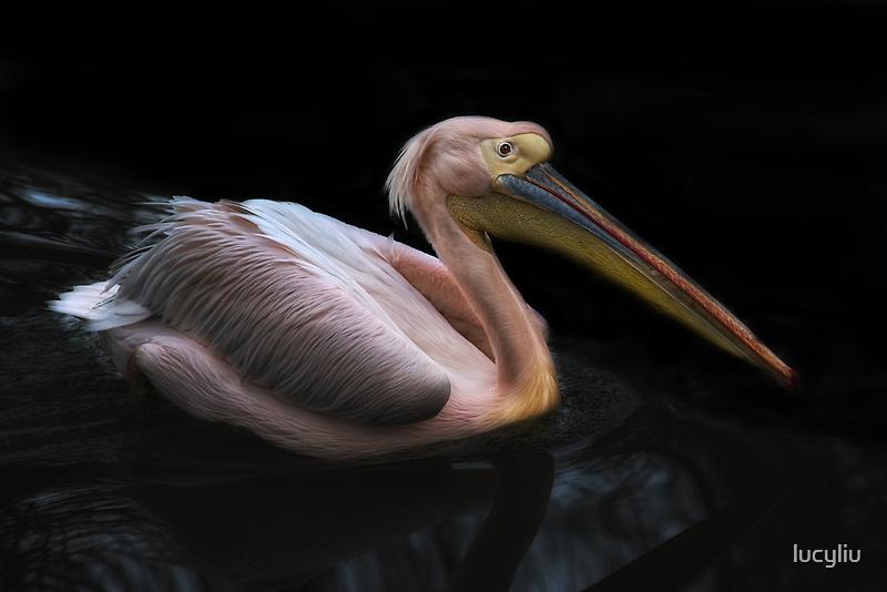 pelicano by lucyliu