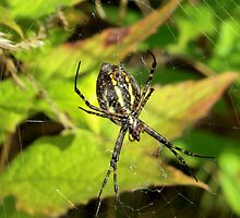 The Writing Spider by Kathleen M. Daley
