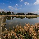 Tamar Island Wetlands, Launceston, Tasmania by fotosic