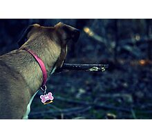 Spring Is For Puppies Photographic Print