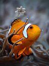 Clownfish by Savannah Gibbs