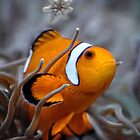 Clownfish by venny