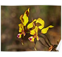 Pansy Orchids Poster