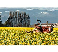 Workin' the Daffodil Fields Photographic Print