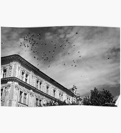 birds flying over Poster