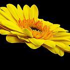 beauty gerber by elvira1