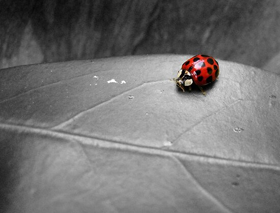 Ladybird on a leaf (4) by LeJour