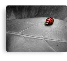 Ladybird on a leaf (4) Canvas Print