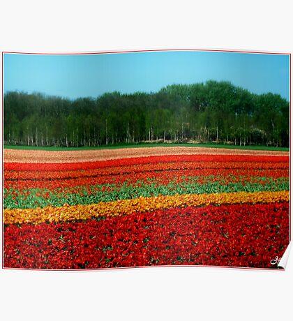 Tulip Field. Poster