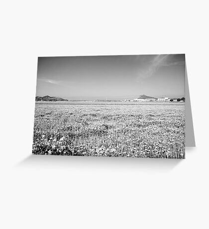view of the Itoshima plain Greeting Card