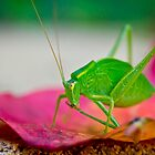 The Grasshopper by geochro