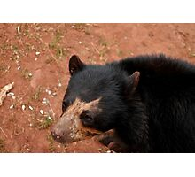 Andean Bear Photographic Print