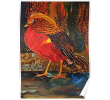 Red RED Bird Poster
