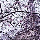 Eiffel Tower through blossom by MorganaPhoto