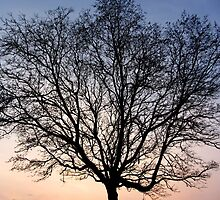 EVENING TREE by gothgirl