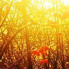 Autumn sun by greywolf260