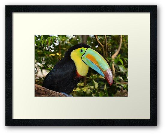 Rainbow Toucan by neil harrison