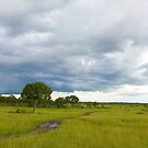 Landscape Masai Mara by Charuhas  Images