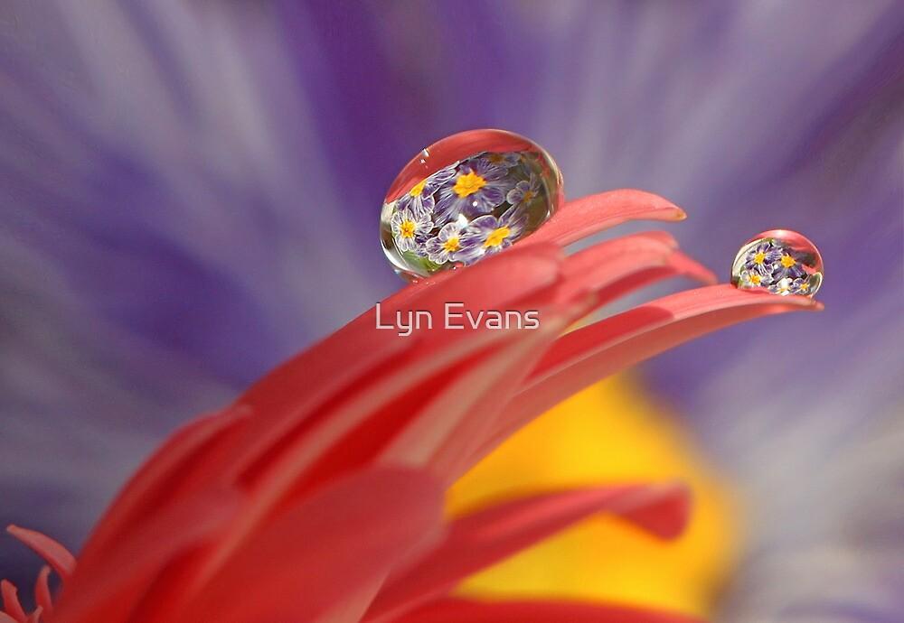 Primrose delight. by Lyn Evans