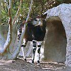 Okapi by Infinite2000