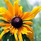 Sunflower by Dani Gee Phokus & [x]Pose