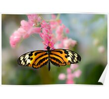 Impressionistic Longwing Poster