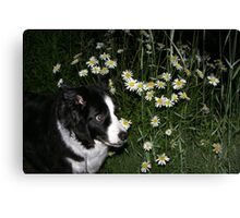 D.O.G. Listening To The Wind Canvas Print