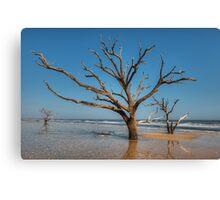 Botany Bay & Edisto Beach Canvas Print