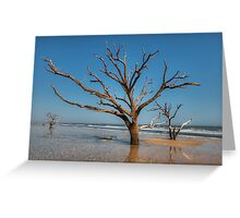 Botany Bay & Edisto Beach Greeting Card