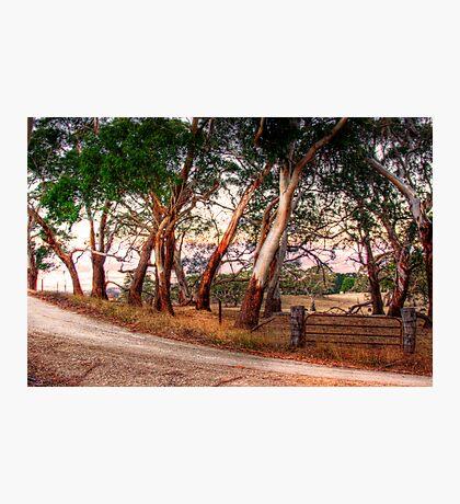 Woodside, Adelaide Hills SA  Photographic Print