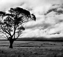 Greendale by MickDavsonPhoto
