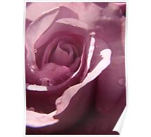 Raindrops on Roses - Mauve Poster
