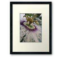 Pash-on flower Framed Print
