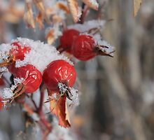 Frozen Hips by Kathi Arnell