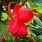 *VOUCHER* - *Elegant Fuchsia* is the next Challenge for Gorgeous flower Cards*