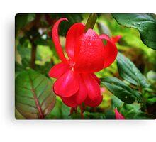 Firetruck Red - Fuchsia Canvas Print