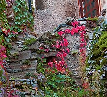 Old Garden Steps by phil decocco