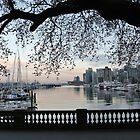 Canadian Sakura by Peyman  - nobodystyle -