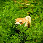 Peeking Panda by Stephanie B